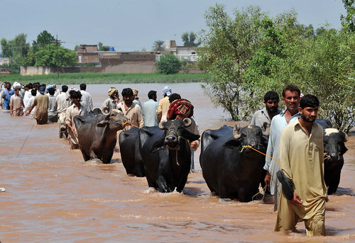 Pakistan floods | by IRIN Photos