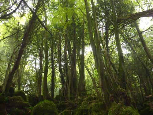 Puzzlewood Trees (28/09/2010)