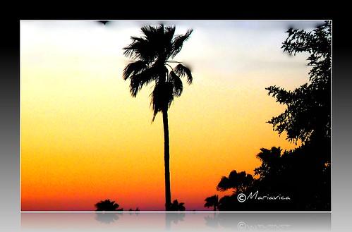 sunset caidadelsolpicnik
