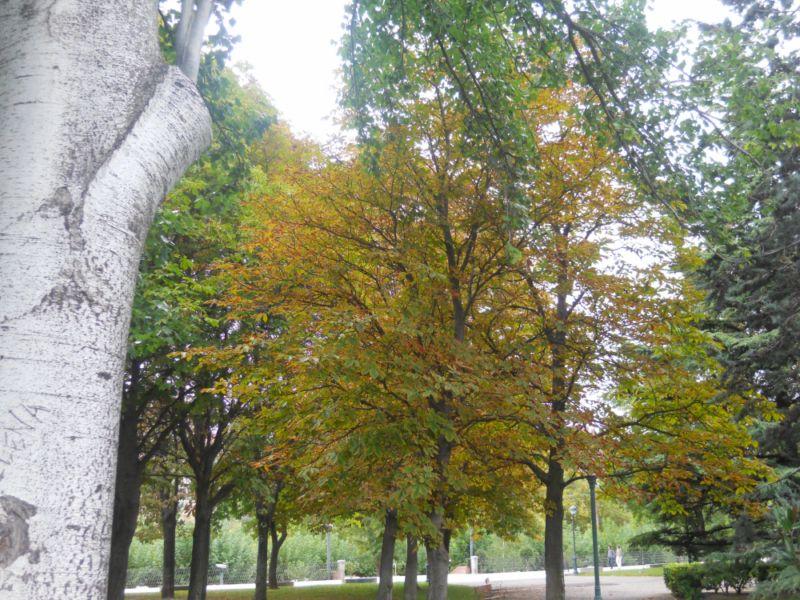 Árboles en otoño 9