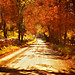 """""""It was one of those perfect English autumnal days which occur more frequently in memory than in life. """" by ArtByChrysti"""