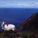 Mt. Brandon, modré Irské moře, foto: Petr Nejedlý