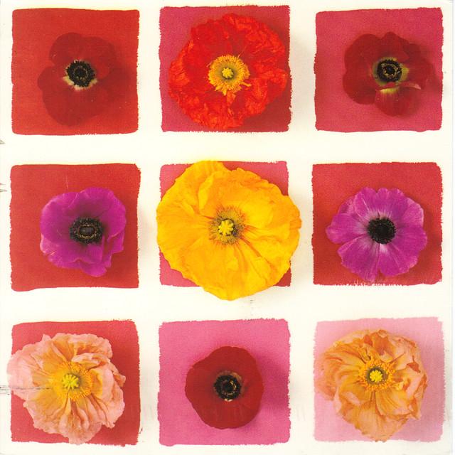 Nouvelles Images 9 Flowers Postcard