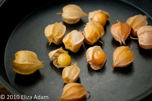 Ground cherry | by 3liz4