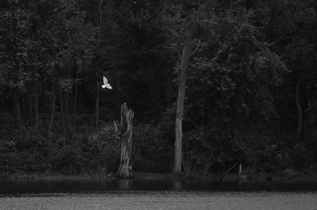 Far Away Something White Flashed Across >> Far Away Something White Flashed Across The Deep Dark Woo Flickr