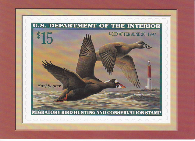 USPS The Federal Duck Stamp Collection Surf Scoter Postcard