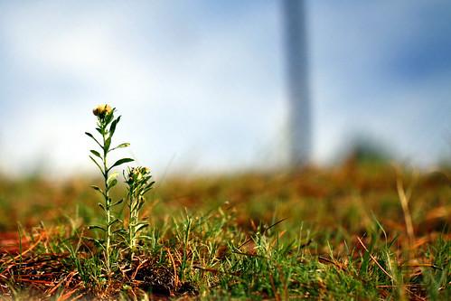 flowers flower grass alabama auburn