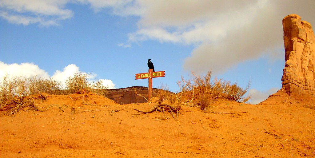 Lonesome crow   In 2002. Monument Valley. Utah/ Arizona ...