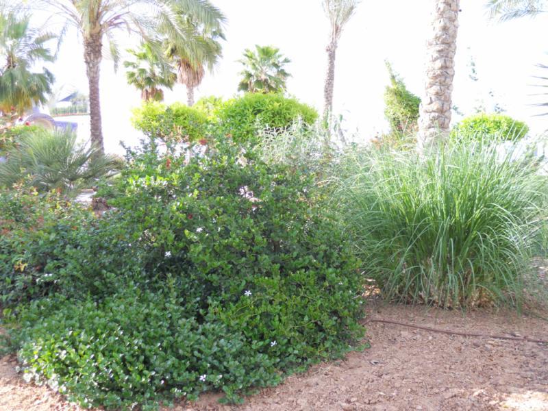 Arbustos y palmeras
