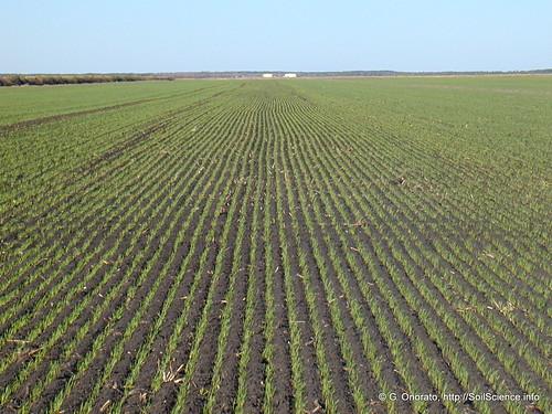 wheat opengroundsfarm gabrieleonorato