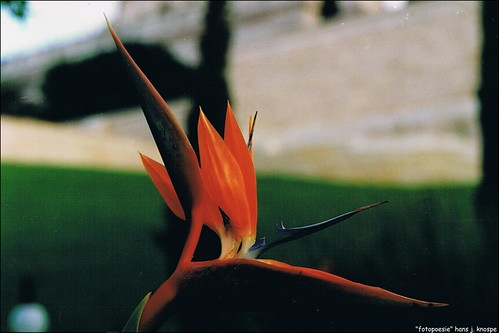 "Symbol: ""Forever in Bloom"" flower:  Bird-of-Paradise near the ""The Shrine of The Báb"" in Haifa on Mount Carmel"
