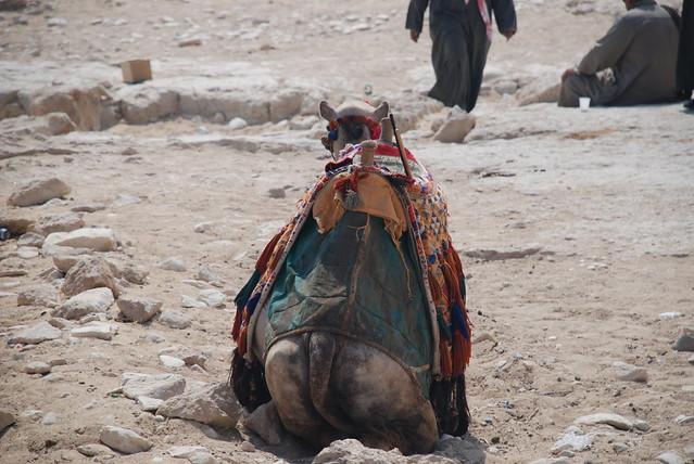 camel butt! Pyramids at Giza, March 2009