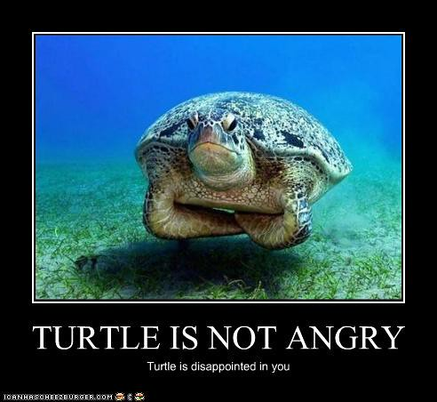 funny-pictures-turtle-is-disappointed | DDSSEE needs a new name