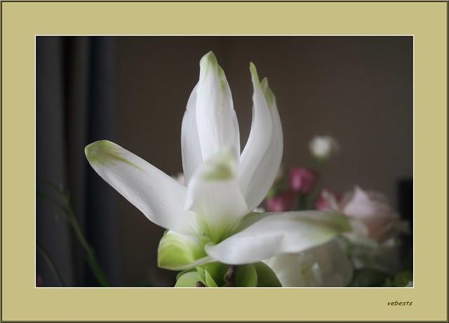 fleur des ... Sables !