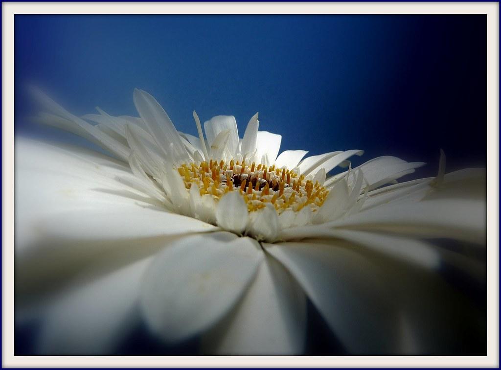 English flower noteletsoriginal photography