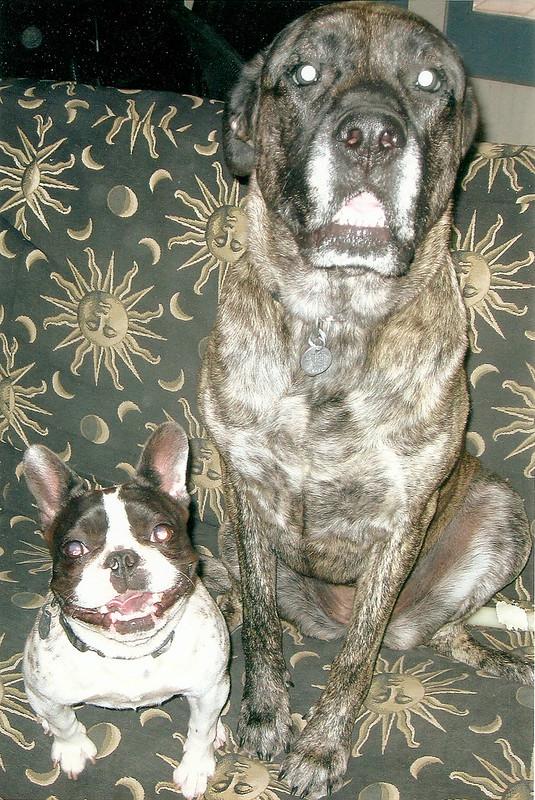 Bruno & Lily
