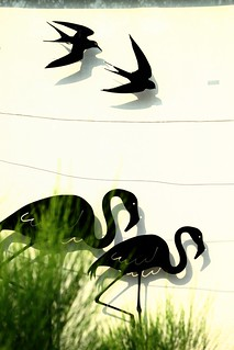Cranes and swallows