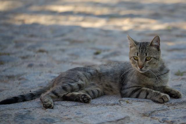 Gato de Rua (Street Cat)