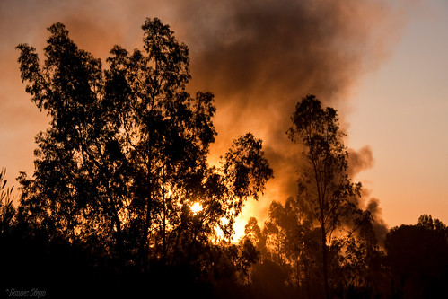 africa trees sunset red sky sun nature silhouette canon southafrica scenery dusk smoke pretoria gauteng mahem 450d canon450d hannessteyn silhouettephotography eosdigitalrebelxsi canonefs18200mmf3556is