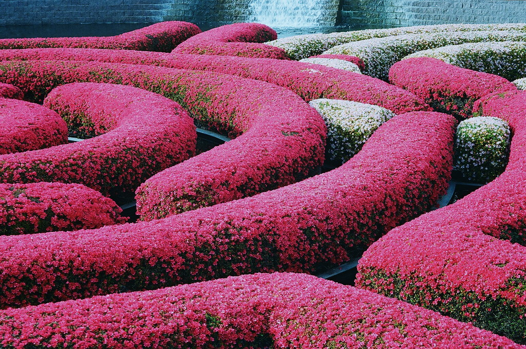 Flower Hedges At The Getty Kaarin T Flickr