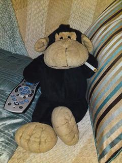 Monkeys Day In - Sofa-Time | by Hexagoneye Photography