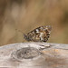 A moth (probably)