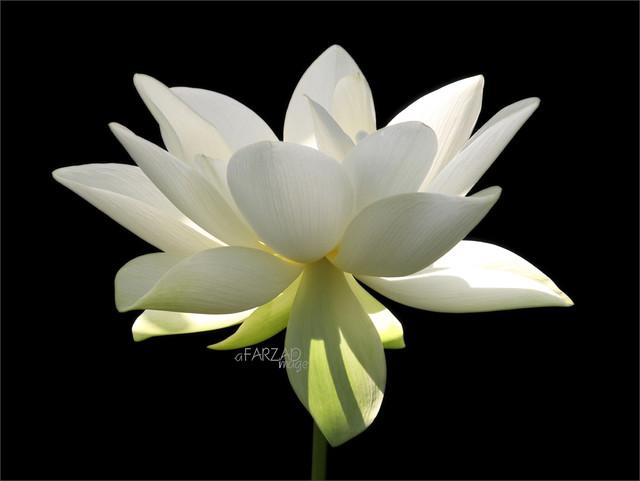 Flower / White flower / sun / nature / White