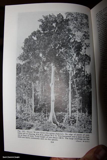WD Francis's  Book Australian Rainforest Trees - Published 1929