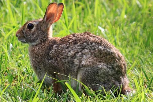 summer sun rabbit nature grass canon outdoors