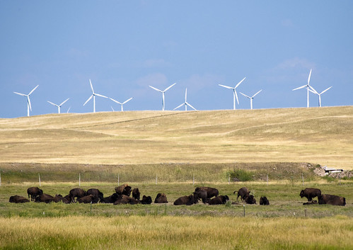 Windmills and American Buffalo | by CGP Grey