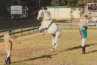 Royal Lipizzan - Horse Jumping