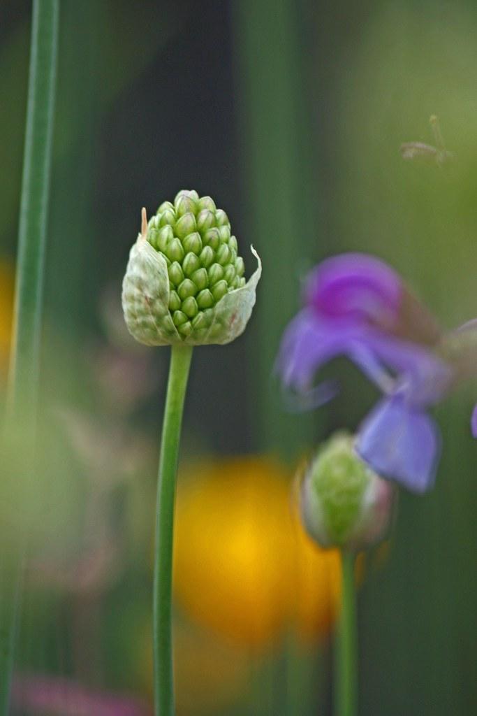 flowers emerging