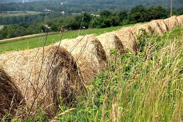 Pennsylvania Hay