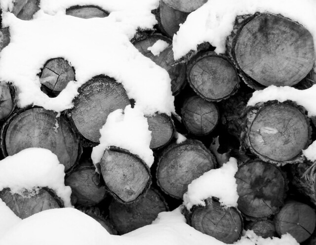 Snowy Logs in Salt Lake City, Utah