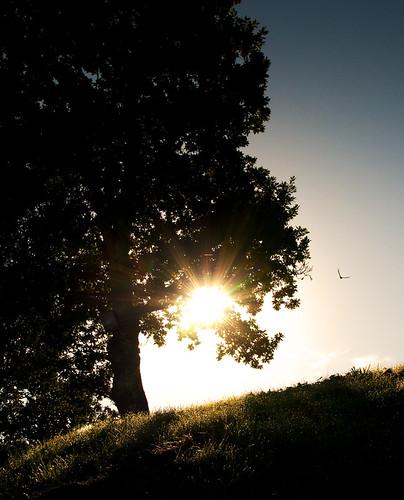 bird silhouette wales sunrise flare swift housemartin paulstat