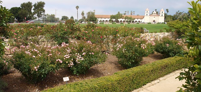 100627 Postel Carefree Delight rose to Mission ICE rm E3 J6275410_2