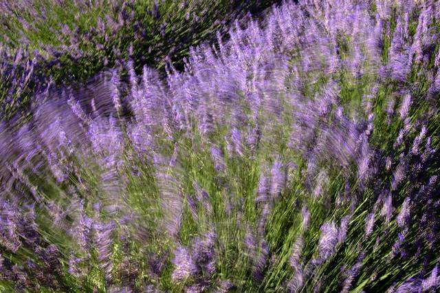 Dans le vent - Oraison (Alpes-de-Haute-Provence)