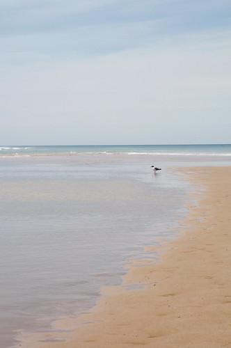 ocean bird eau surf waves capecod sable shore vagues plage atlanticocean oiseau océan littoral marconibeach borddemer océanatlantique oceanshore