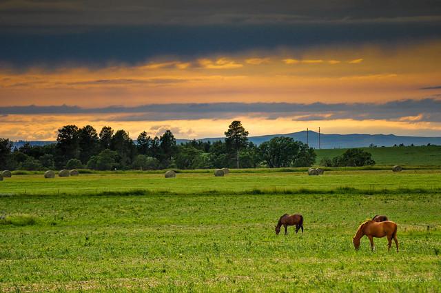 Ranch, Horses - Wyoming