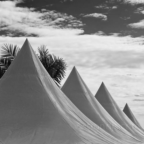 summer blackandwhite bw white abstract monochrome norway clouds canon palms square tents europe raw fineart palmtrees 5d scandinavia squarecrop 2010 hurum eos5d buskerud filtvet villamalla trondjs palmleafs ef70300mm1456isusm