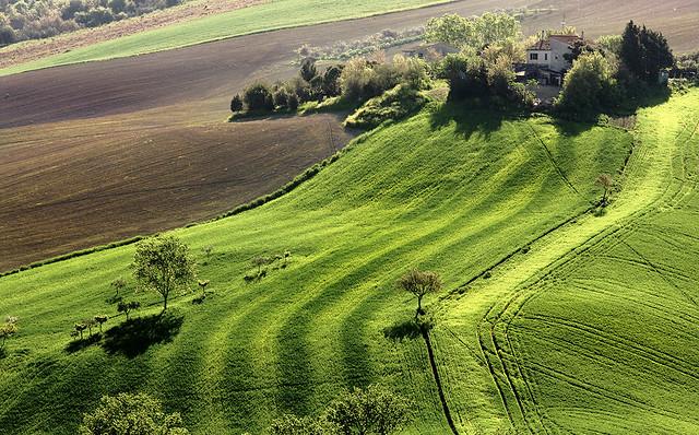Landscape: Deep Green
