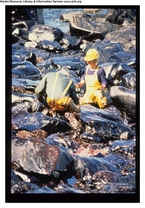 Terms Of Use >> Exxon Valdez Oil Spill - 0726 | Beach cleanup workers in ...