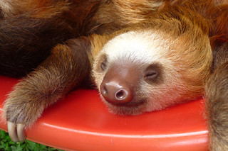 sleepy sloth 1020957 | by shootheworld