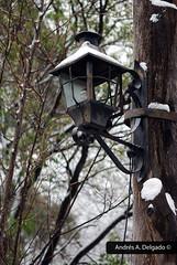 El farolito invernal (The winter lantern)