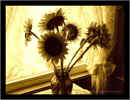 fun farmersmarket jerry sunflowers sunnyday minnetrista lifeisgreat tableforone jerphotography