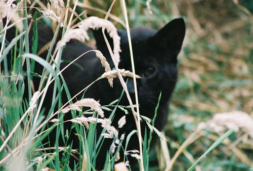 Hidden Black by Chriss Pagani