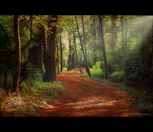 forest by ❁bluejay 2006❁
