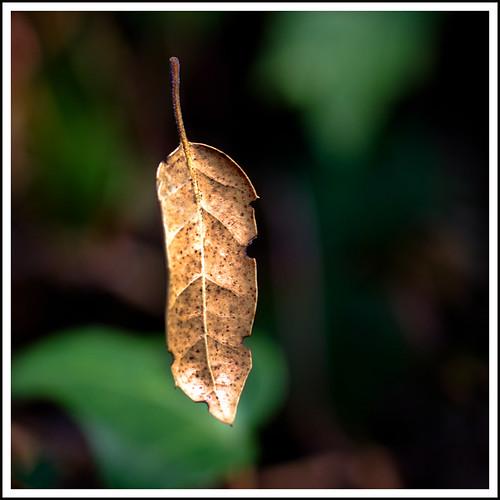leaf floating nostringsattached macromondays