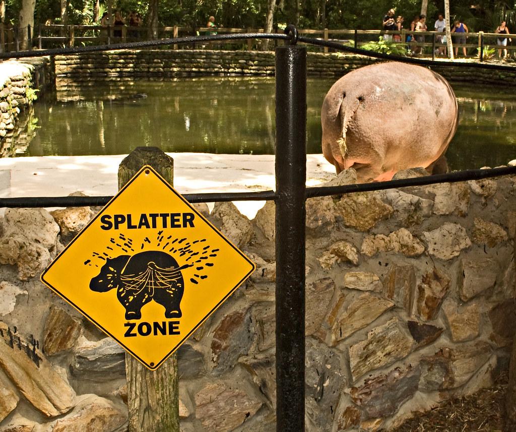 Lucifer The Hippo In Homosassa