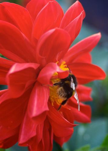 flowers plants nature closeup dof insects bee topshots natureselegantshots applecrypt